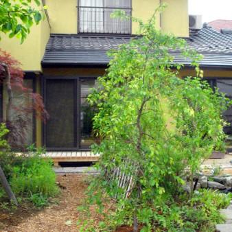 増築工事に伴った、庭造り
