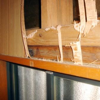 工事中:冬眠(睡眠?)のコウモリを屋外に逃がす。