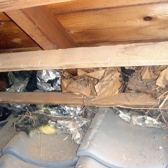 工事中:既存軒天を撤去すると鳥の巣を発見。