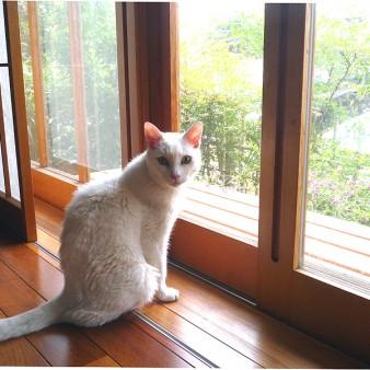 8:猫 家族の一員である猫